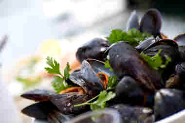 Cooked mussels on a plate