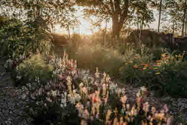 Fridas Blomster, Brämhult